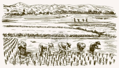 Illustration for Asian farmers working on Field. Hand drawn illustration. Rice harvest. - Royalty Free Image
