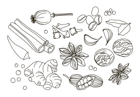 Spices, condiments and herbs decorative elements