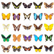 Set of beautiful and colorful butterflies isolated...