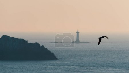 Seagull with Pointe du Grouin in the background. A rocky, dangerous point that extends into the Atlantic from western Brittany, France.