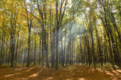 sun beam through the branches in the autumn forest