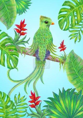 Photo pour Oiseau exotique sur une branche aux feuilles tropicales . - image libre de droit