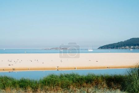 Coastline landscape with flock of seagulls