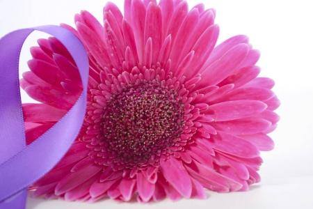 Photo pour International Womens jour Gerbera rose avec ruban violet symbolique sur la table en bois blanc. - image libre de droit