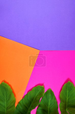 Photo for Bright color blocking summer flat lay with tropical leaves on orange, pink and purple background with negative copy space. Modern stylish top view minimalism creative layout. Vertical orientation. - Royalty Free Image