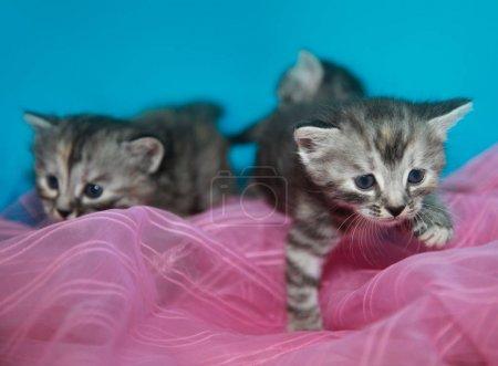 Foto de Jugando en casa los gatos Fluffy - Imagen libre de derechos