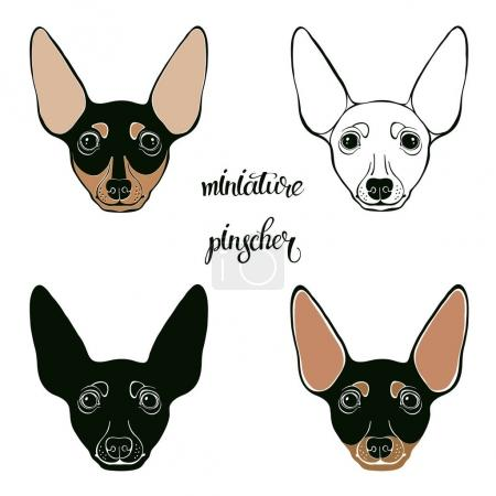 Miniature Pinscher faces set, vector illustration...
