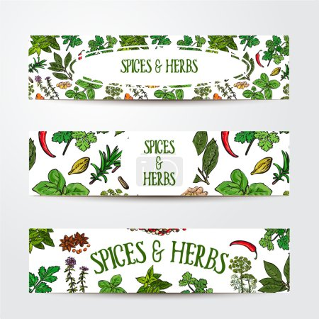 Illustration for Set of three hand drawn banner templates with spices and herbs, sketch style vector illustration isolated on white background. Banner templates with realistic hand drawn herbs and spices - Royalty Free Image