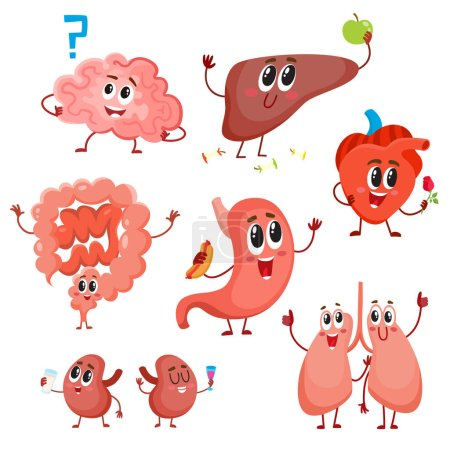 Illustration for Set of cute and funny healthy human organ characters - heart, lungs, kidneys, intestines, liver, stomach, brain, cartoon vector illustration isolated on white background. Human organ characters - Royalty Free Image