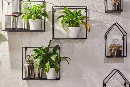 Photo pour Plantes ornementales dans des pots sur une étagère. Le décor de l'intérieur . - image libre de droit