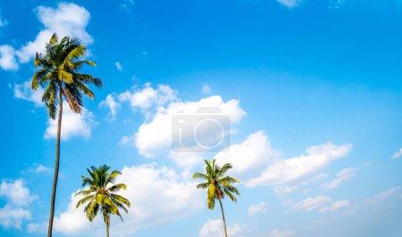 Photo pour Les palmiers sur le fond d'un ciel bleu ensoleillé avec les nuages blancs - image libre de droit