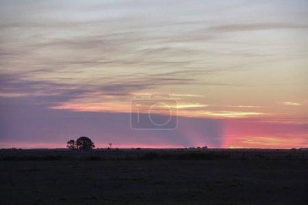 Photo pour Paysage au coucher du soleil, La pampa, Argentine - image libre de droit