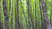 chestnut forest with several sheets from different points of vie