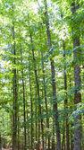closeup of green chestnut grove vertical composition