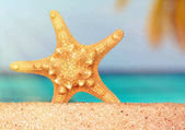 sea shells starfish on tropical sand turquoise caribbean summer vacation travel background