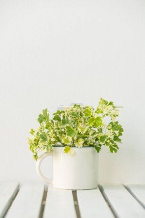 Green vase plant on table with copy space