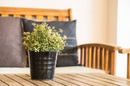 Vase plant