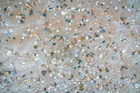 Photo pour Beaucoup de textures de coquilles sur le sable pour le fond - image libre de droit