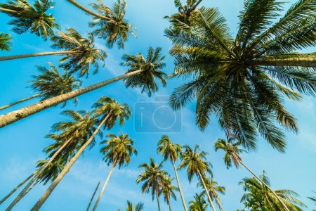 Photo pour Beau cocotier sur fond bleu ciel - image libre de droit