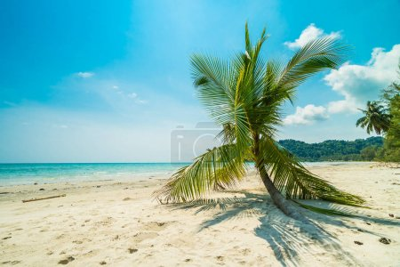 Beautiful nature tropical beach and sea with coconut palm tree o
