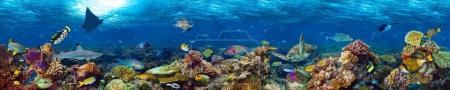 Photo pour Paysage récifal corallien sous-marin fond de bannière super large dans l'océan bleu profond avec des poissons colorés et la vie marine - image libre de droit