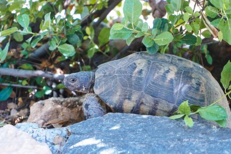 Photo for Beautiful turtle in the garden - Royalty Free Image