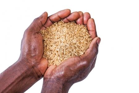 a close up of hands holding rice