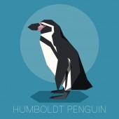 Flat Humboldt penguin