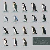 Set of flat geometric species of Penguins