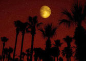 Palm trees silhouetted against night sky