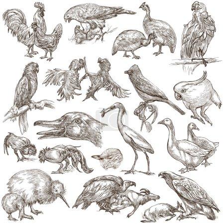 Birds. Animals around the World - An hand drawn full sized pack.