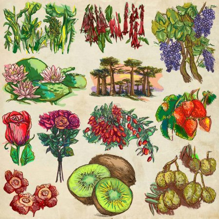 flowers and trees around the world - an hand drawn collection, f