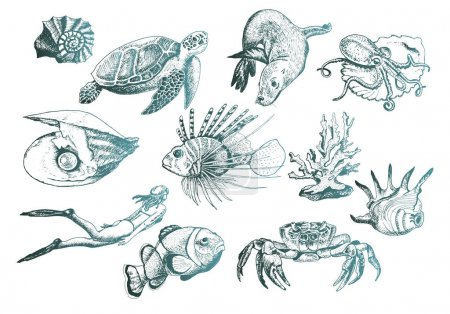 Ocean Life and Marine Creatures with Loggerhead Turtle and Shell Vector Set