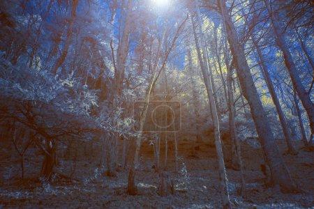Obraz w podczerwieni w świetle księżyca - czarujący las w mitycznej górze Olimp, Grecja