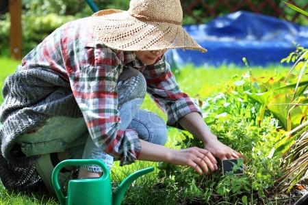 Plant care in the garden.