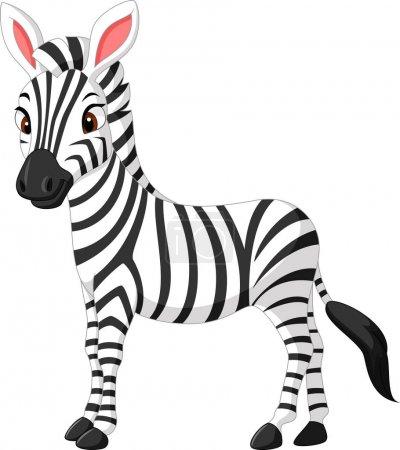 Illustration for Vector illustration of Cute zebra cartoon - Royalty Free Image