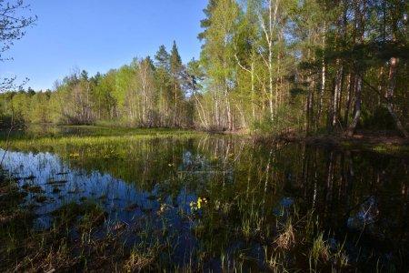 Foto de Estanque en el bosque de la primavera. Puede paisaje con árboles y agua. - Imagen libre de derechos
