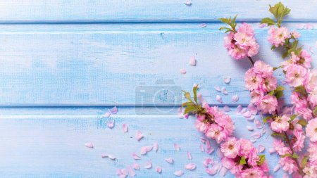 Background with pink sakura flowers