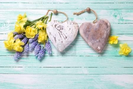 Two decorative hearts and fresh yellow and blue spring flowers
