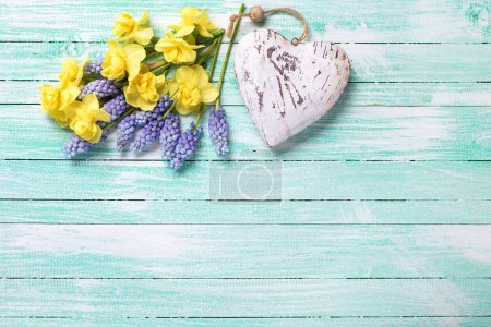 Decorative heart and fresh yellow and blue spring flowers