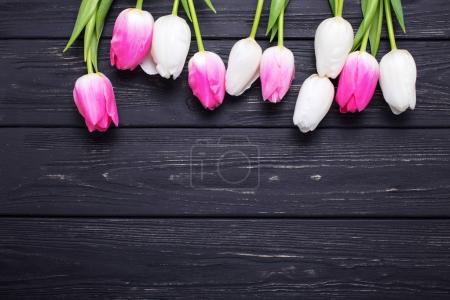 Pink and white tulips flowers