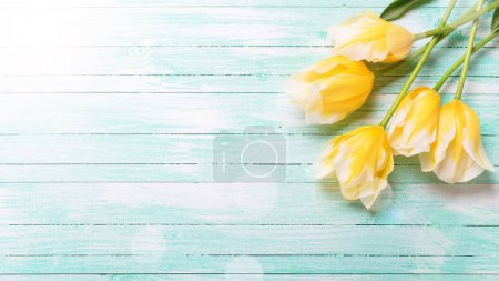 Background with spring tulips.