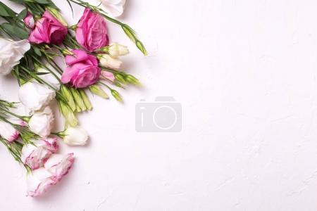 Bunch of pink and white eustoma flowers