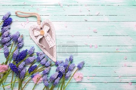 Frame  with pink almond and blue muscaries flowers  and heart on turquoise wooden background. Place for text. Selective focus.