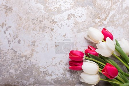 Bright red and white tulips flowers on grey textured  background. Selective focus. Place for text. Flat lay.