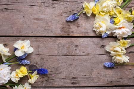 Frame  from narcissus and  muscaries flowers on rustic  wooden background. Selective focus. Spring  background. Place for text.