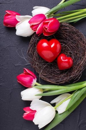 Red decorative hearts in nest and bright  spring  tulips flowers on black textured  background.  Selective focus.