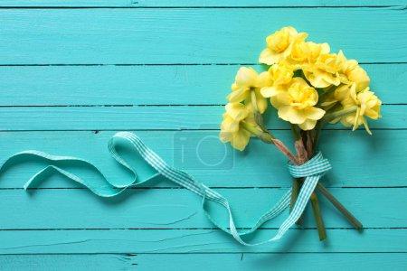 Bright yellow spring daffodils