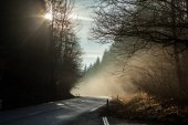 dark country road in forest and sun