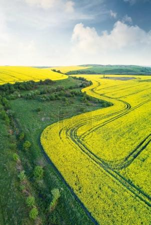 Agricultural landscape in the summer time
